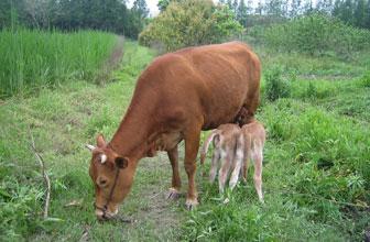 村民讨牛被要求做DNA