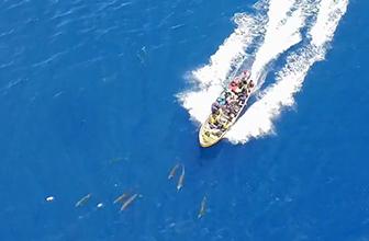 壮观海豚群引众人惊叹