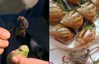 炳万族吃蜗牛味道惊艳